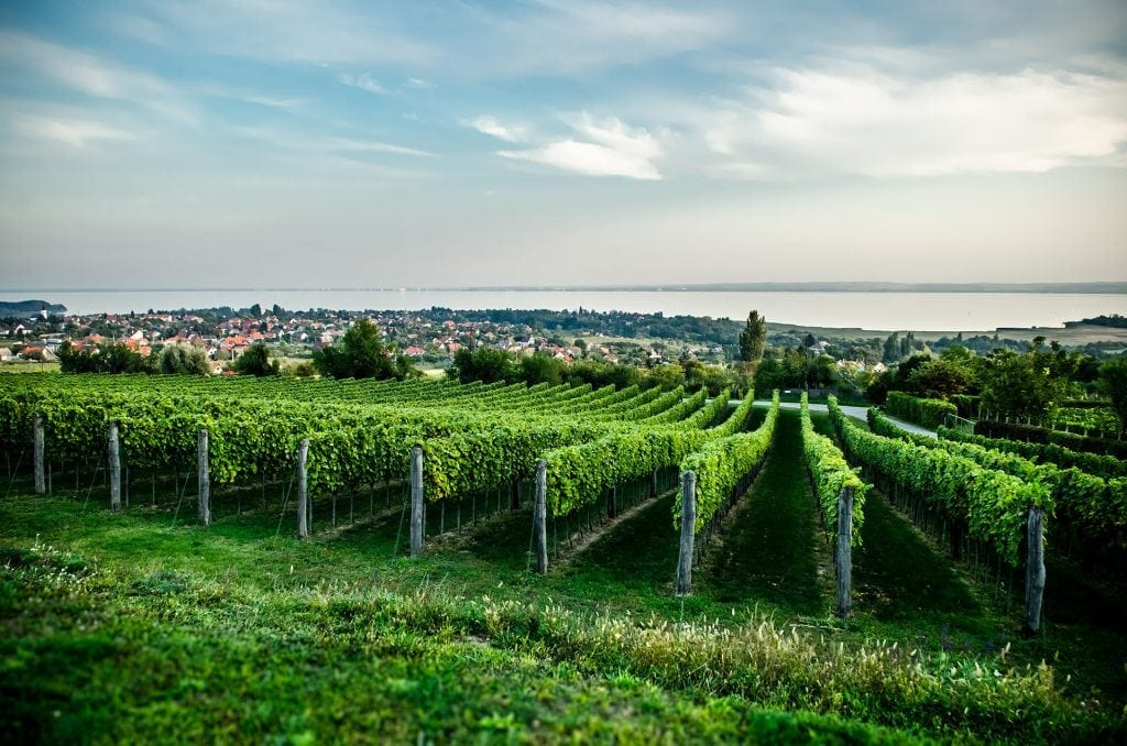 Balaton Wine Tour Petranyi Pince vineyard 1024x678 - Second homes... prin vecini