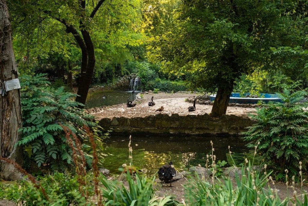 cismigiu2 1024x683 - Galerie foto: GRĂDINA CIȘMIGIU, cea mai veche grădină publică bucureșteană